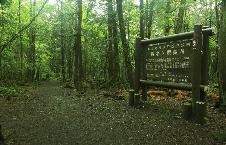 Aokigahara El bosque de los suicidios en Japon