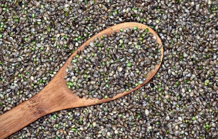 Estudiando los beneficios de las semillas de cannabis