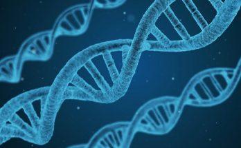 principales ramas de la biología
