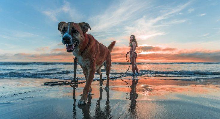 Turismo con perros