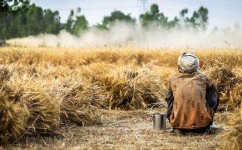 Pérdidas del sector agrícola
