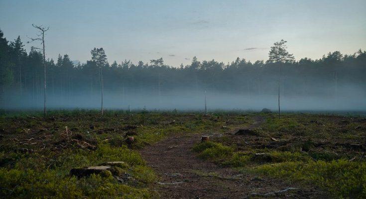 Degradación de tierras